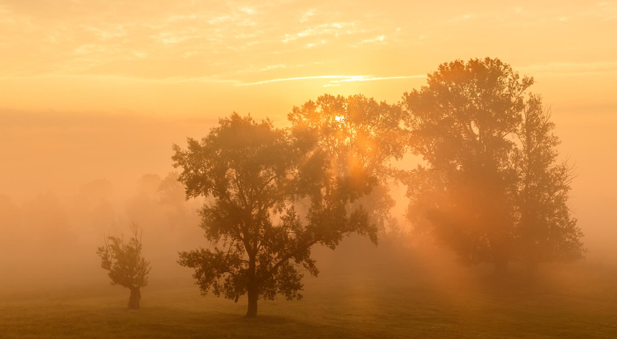 Promienie słoneczne przedzierając się przez liście drzew i poranne mgły tworzą wspaniałe widoki